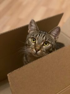 cat hiding in a carboard box