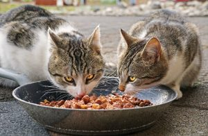 cats don't chew their food