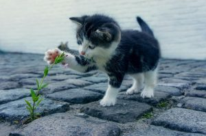 cats have an excellent sense of smell