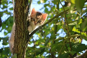 cats have a hard time climbing down a tree