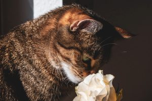 cats have a great sense of smell