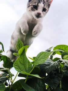 Cats are amazing jumpers